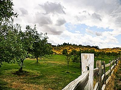 Boise Foothills - Boise Real Estate