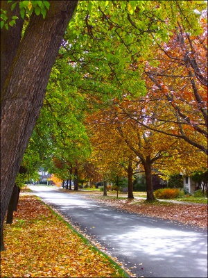 Harrison Blvd. in the fall.