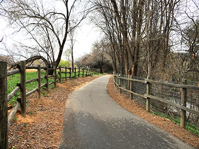 Trees lining Wilson Pathway in Canyon County